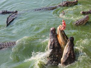 Крокодилы Вьетнам
