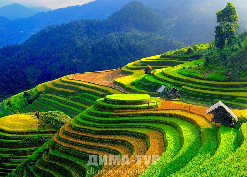 Сапа, Вьетнам: рисовые террасы