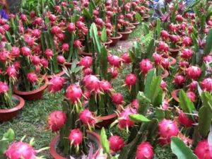Сувениры из Вьетнама: Свежие фрукты