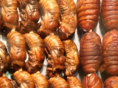 Еда во Вьетнаме. Насекомые