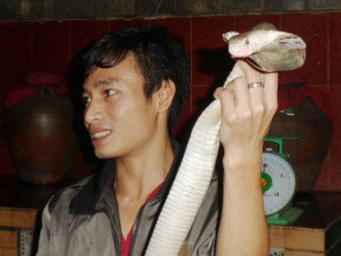 Ритуал со змеей. Кобра - это еда