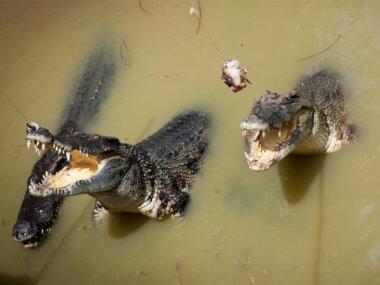 Экскурсия из Муйне 3 в 1: Лежачий будда, минеральные источники Биньчау, крокодиловая ферма
