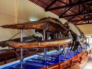 Экскурсия из Муйне: Храм кита Фантьет