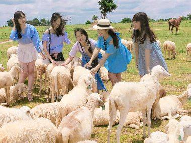 Овечья ферма Suoi Tien в Камрани