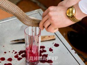Ритуал с коброй