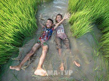 Вьетнамский рис и рецепт здоровья и долголетия