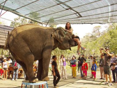 Катание на слонах во Вьетнаме